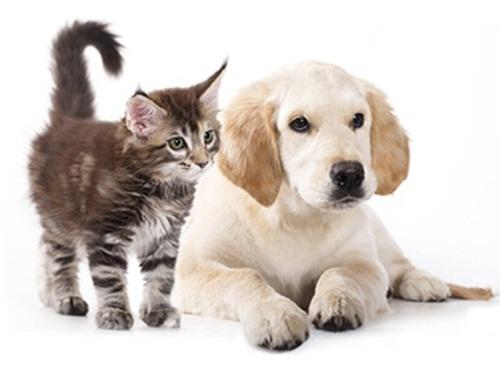 Домашные животные